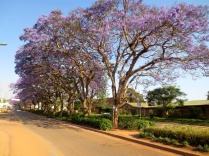 Street view in Mzuzu